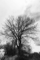 Bare trees in the countryside, black and white landscape