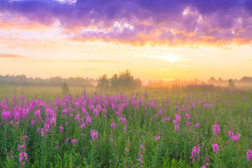 rural landscape with sunrise  and  blossoming meadow