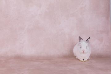 white decorative rabbit