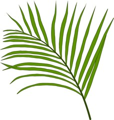 Foglia verde paripennata di bamboo