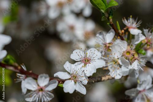 Fruhling Winter Erste Blumen Wetter Insekten Deko Stock