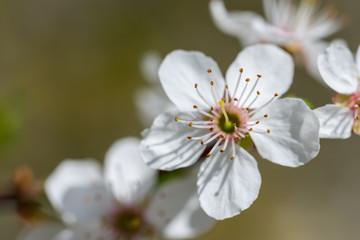 Frühling, Winter, erste Blumen, Wetter, Insekten, Deko,