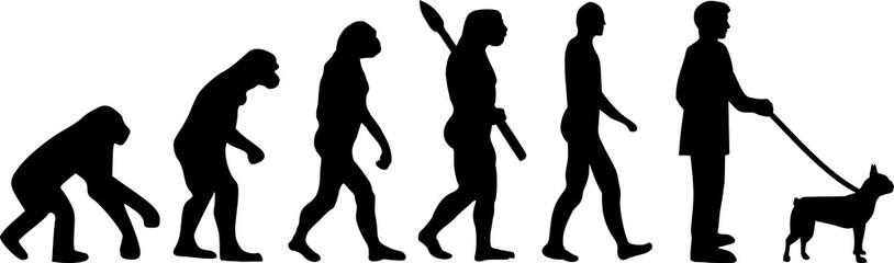 Boston terrier evolution