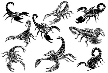 Graphical set of scorpions isolated on white background,vector sketchy illustration,tattoo