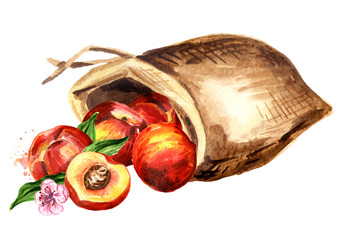 Sack of peaches. Watercolor hand drawn illustration, isolated on white background
