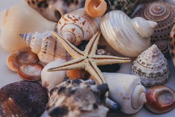 Seashell background. Lots of different seashells piled together. Seashells collection. Closeup view of many different seashells as texture and background for design.