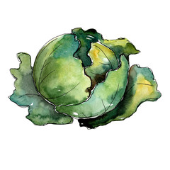Green cabbage vegetables  in a watercolor style isolated. Full name of the vegetablles: cabbage. Aquarelle vegetables for background, texture, wrapper pattern or menu.