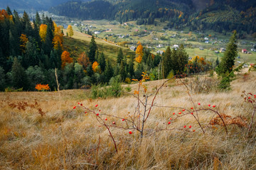 Panoramic view of blooming wild nature of Carpathians