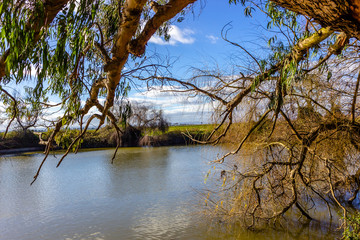 View on autumn landscape of river and trees in sunny day.