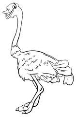 ostrich bird animal character cartoon coloring book