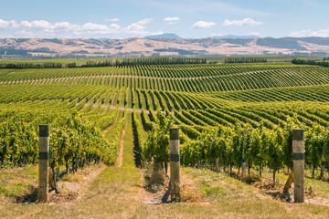 Self adhesive Wall Murals Vineyard rolling hills with vineyards in Marlborough region, South Island, New Zealand