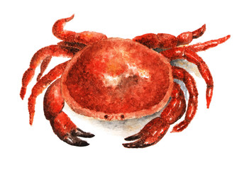 Crab. Watercolor illustration painted on white background. Crab, seafood. Illustration drawn with watercolors.