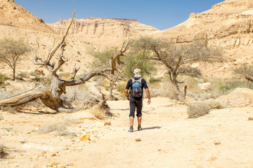 Fototapete - Tourist walking desert trail canyon mountains landscape view.