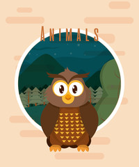 Owl cute animal card