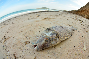Dead fish washed ashore after a hurricane