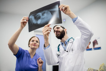 Vets discussing x-ray of dog