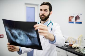 Vet examining a dog x-ray
