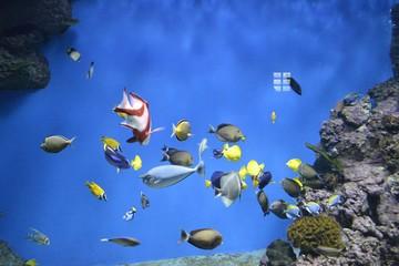 Разноцветные рыбки в аквариуме на синем фоне воды