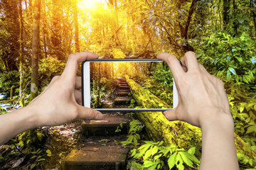 Tourist taking a picture of beautiful nature trail in a forest during sunrise with mobile smartphone