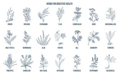Herbs for digestive health. Wall mural