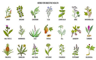 Herbs for digestive health Wall mural