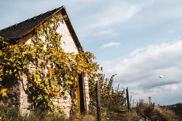 Altes Haus im Weinberg