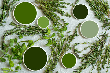 Aromatic herbs rosemary, thyme, mint and color samples