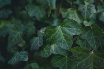Leaves background with shallow depth of field and faded look