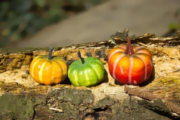 Decoration - pumpkins on a old wood