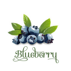 Blueberry, leaves and berries isolated on white background. Vector illustration.