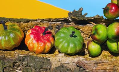 Decoration - pumpkins apples on old wood