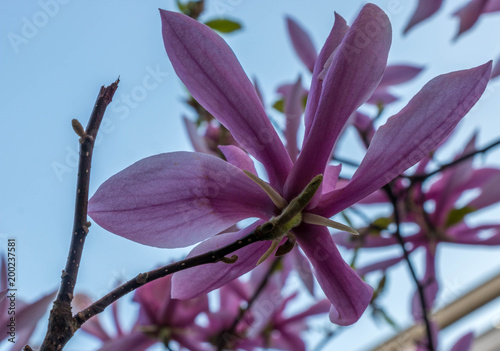 Fleur Magnolia Stock Photo And Royalty Free Images On Fotolia Com
