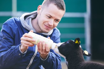 Feeding small lamb