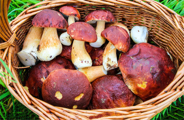 White mushroom basket top view