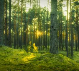 Foto op Aluminium Lente green forest