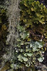 Lichen and vegetation on a tree trunk