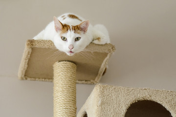 cat on a cat tree looking curiously at the camera.