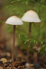 Mushrooms close up