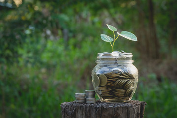 Coins in jar on nature background, Concept finance business, saving investment and accounting concept.