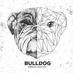 Hipster animal realistic and polygonal bulldog face. Triangle animal