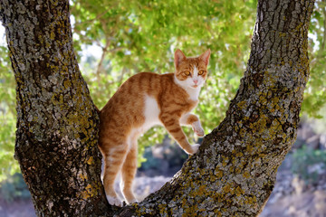 Kitten climbing curiously on a tree