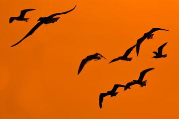bird silhoette