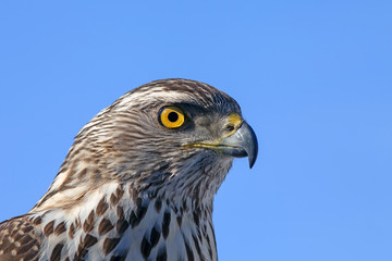 the predatory look of a hawk
