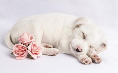 Parsnips Pink Roses 2
