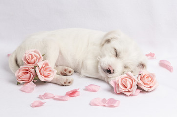 Parsnips Pink Roses 1