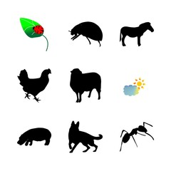 icon Animal with bright, pet, leaf, cock and horse