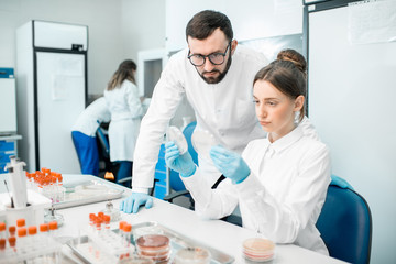 Couple of medics in uniform looking on the effect of antibiotics on bacteria in Petri dishes making bacteriological tests in the modern laboratory