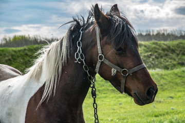 Brown horse wearing bridle.