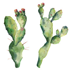 Watercolor cactuses with flowers. Hand painted opuntia isolated on white background. Illustration for design, print, fabric or background.