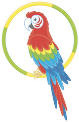 Colorful parrot macaw sitting on a ring, vector illustration in a cartoon style